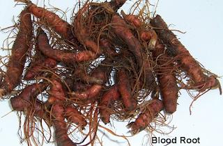 الجذور الدموية لعلاج الثآليل