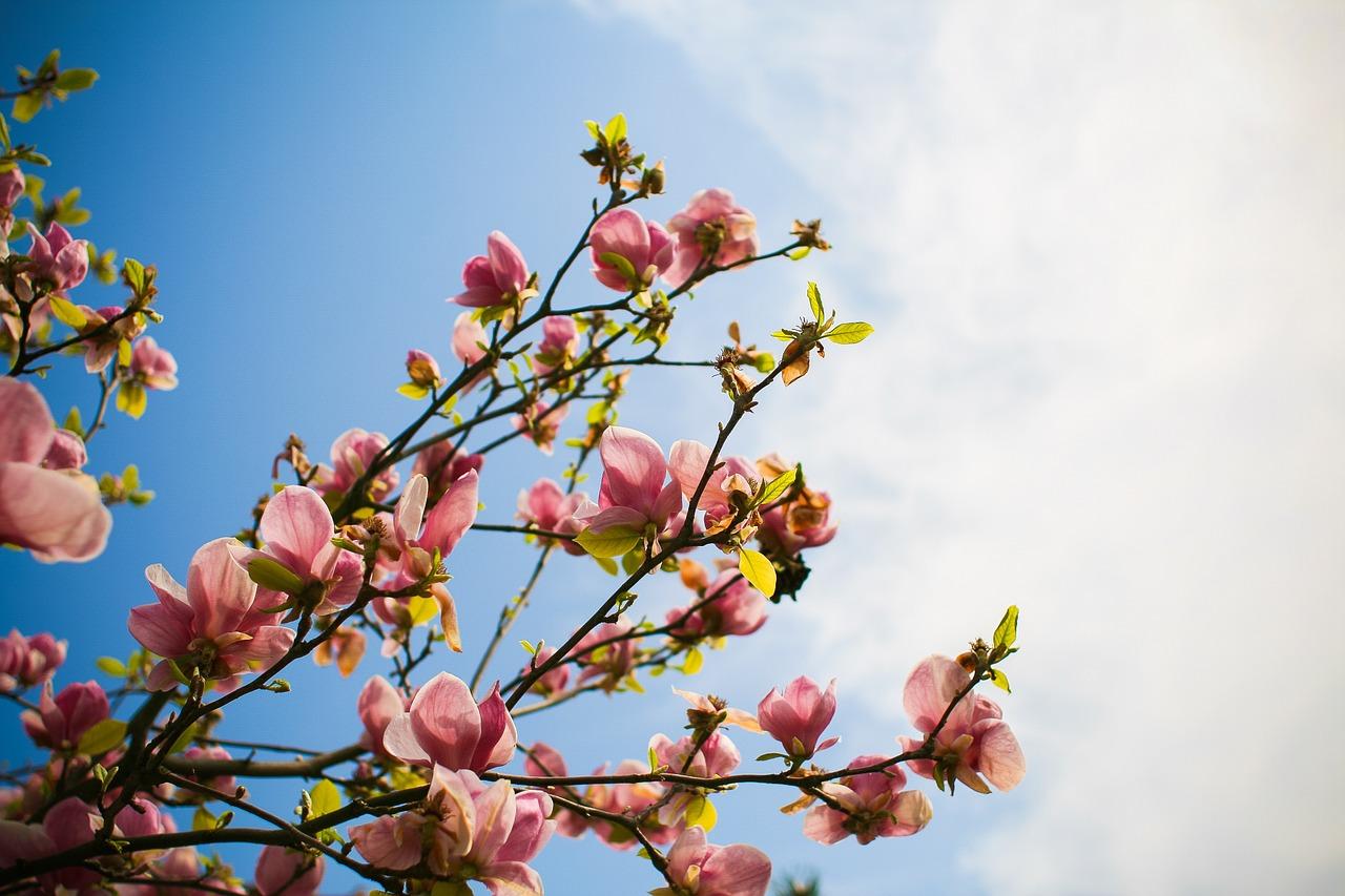 Dobrze, że już idzie wiosna
