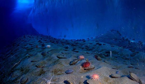 Denizin Dibinde Ölü Bedenlere Ne Oluyor İzleyin