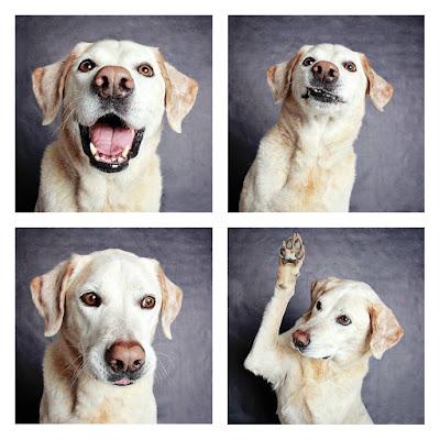 dog-rescue.jpg
