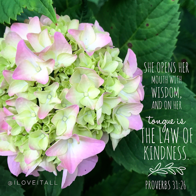 #proverbs #bible verse #iloveitall #kindness #hydrangea #faith #bible
