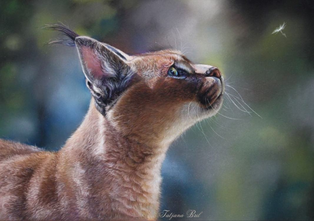 01-Caracal-Wild-Cat-Tatjana-Bril-Domestic-and-Wild-Animal-Drawings-www-designstack-co