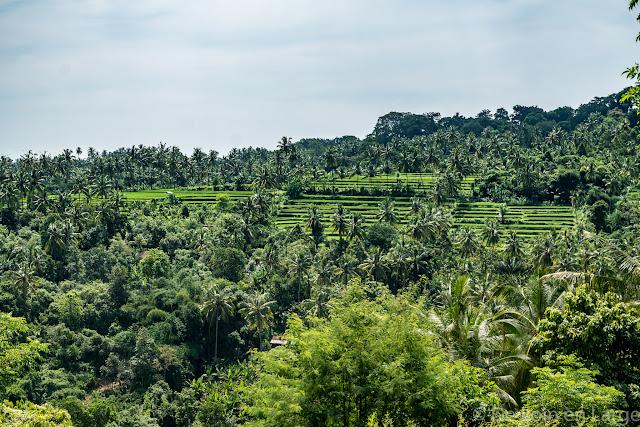 Rizières Munduk - ricefields Munduk - Bali