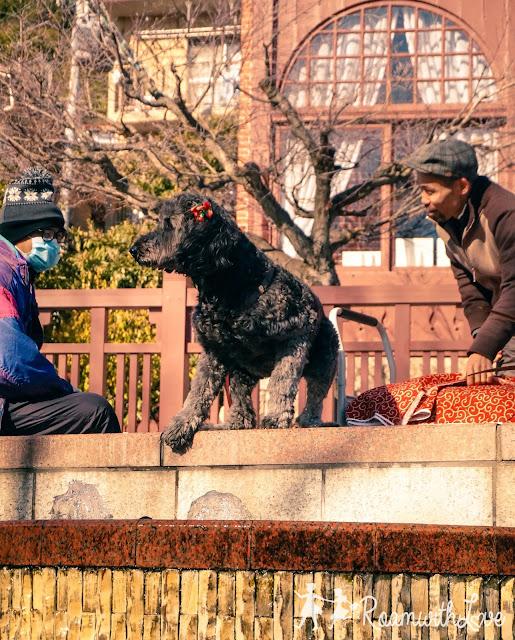 Kobe,โกเบ,สเต็ค,บ้านฝรั่ง,รีวิว,เที่ยว,ญี่ปุ่น,สวีท