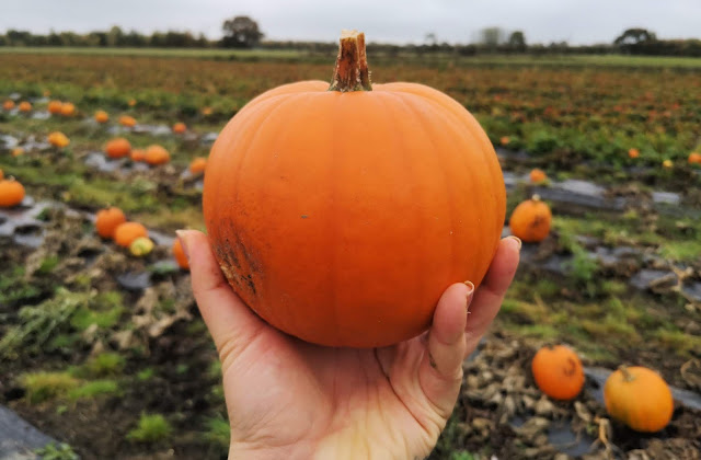 A picture of a pumpkin at Wymeswold Fruit Farm