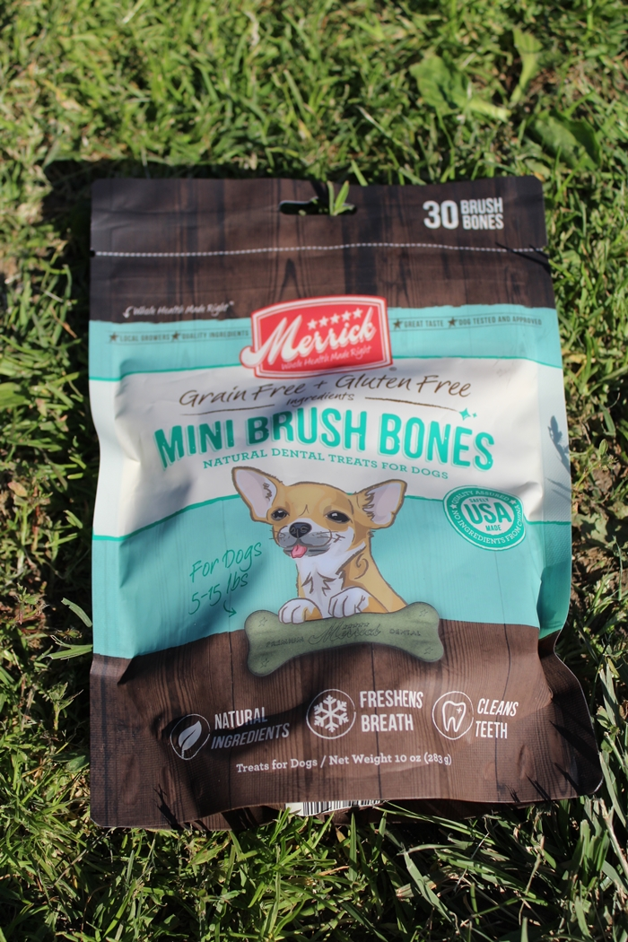 Merrick Mini Brush Bones Dental Chews - Chewy.com Review #ChewyInfluencer