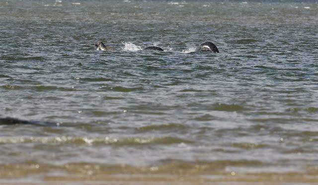 Monstro do lago Ness? fotógrafo amador diz que sim - MichellHilton.com