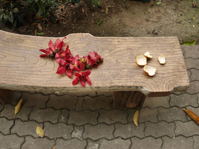 Red silk-cotton (Bombax ceiba, kapot) flowers and tangerine peel on a park bench