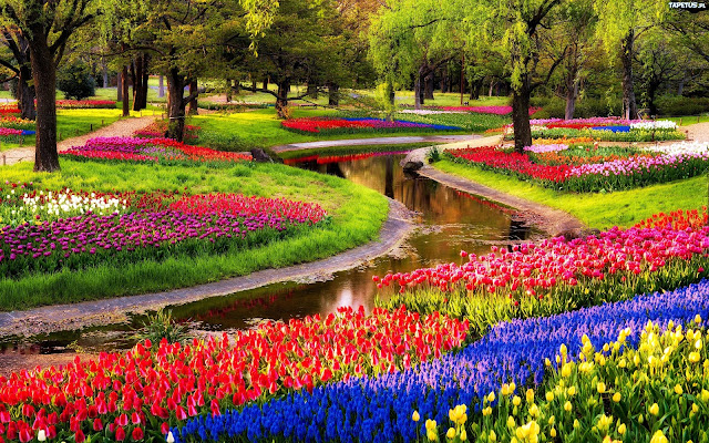 Keukenhof park, Beautiful Flower Garden at Netherlands