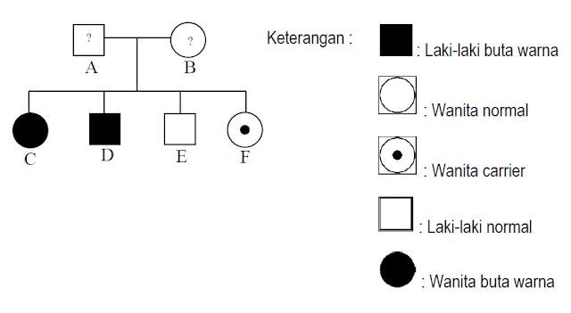 peta silsilah dari keluarga yang mempunyai riwayat buta warna