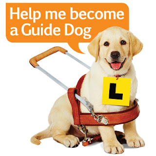 Guide Dog Puppy wearing an L Plate sign