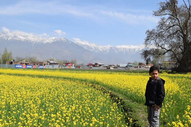 travelling to kashmir