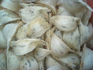 Manfaat Sarang Burung Walet