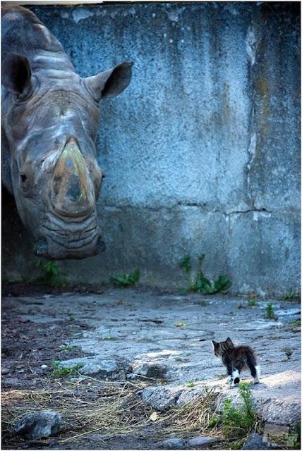 Hermosa fotografia de rinoceronte y gatito