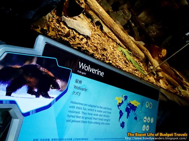 bowdywanders.com Singapore Travel Blog Philippines Photo :: Singapore :: Singapore Zoo - The World's Best Rainforest Zoo