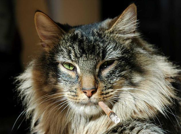 sićušna mršava maca