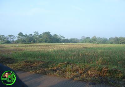 Sawah di Blok Tegal Sungsang, Desa Bendungan, Kecamatan Pagaden Barat, Kab. Subang.