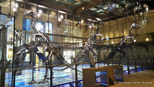 100Masters, Benissart, Museo Ciencias Naturales - Bruselas por El Guisante Verde Project