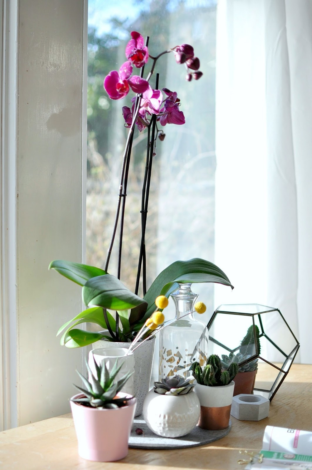 orchid care, orchid plant care, phalaenopsis, how to care for orchids, how to grow orchids, looking after orchids, plant gang, interior styling, spring, blooms, flowers