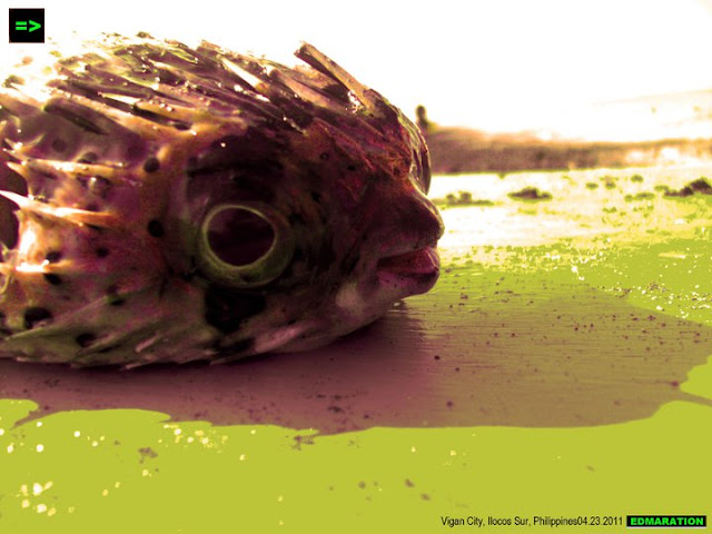 Mindoro Beach, Vigan City | My First Puffer Fish Actual Encounter