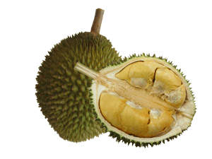 Gambar Buah Durian Lengkap  Info Buah Durian