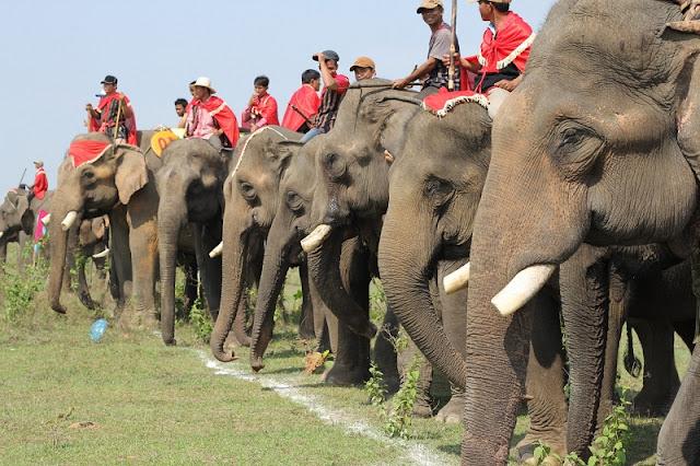 Elephant Racing Festival 1