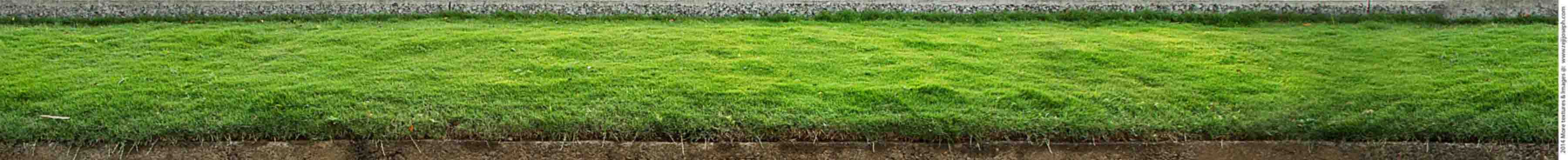 Grass texture 00001