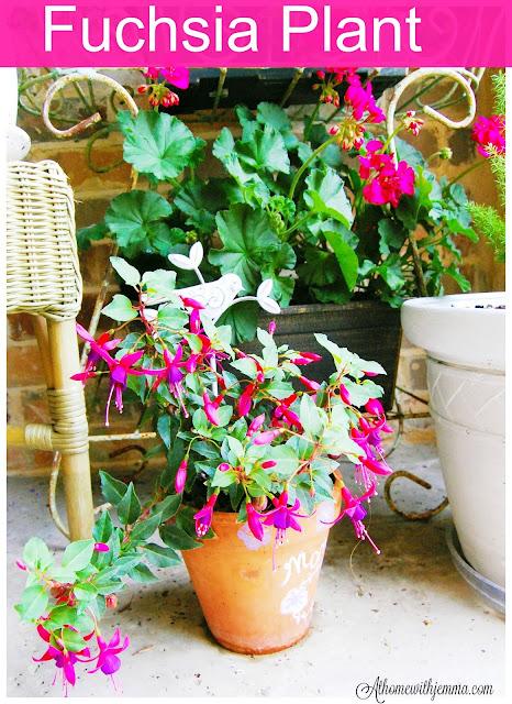 fern-fuchsia-plants-garden-gardening-garden-tales-athomewithjemma