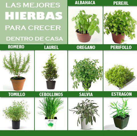 Cultivar el Huerto Casero Hierbas para cultivar dentro