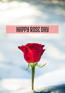 Rose Day Images