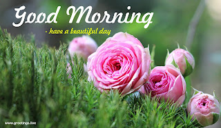 Have a beautiful day- morning greetings with rose images