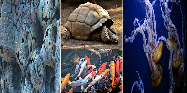 البكتيريا,الأطول عمراً,حيوانات,مخلوقات,الحوت,قنديل البحر,الببغاء,الماكاو,السلحفاة,السلمندر الأعمى