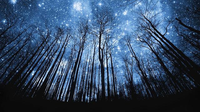 """""""Cielo estrellado"""""""