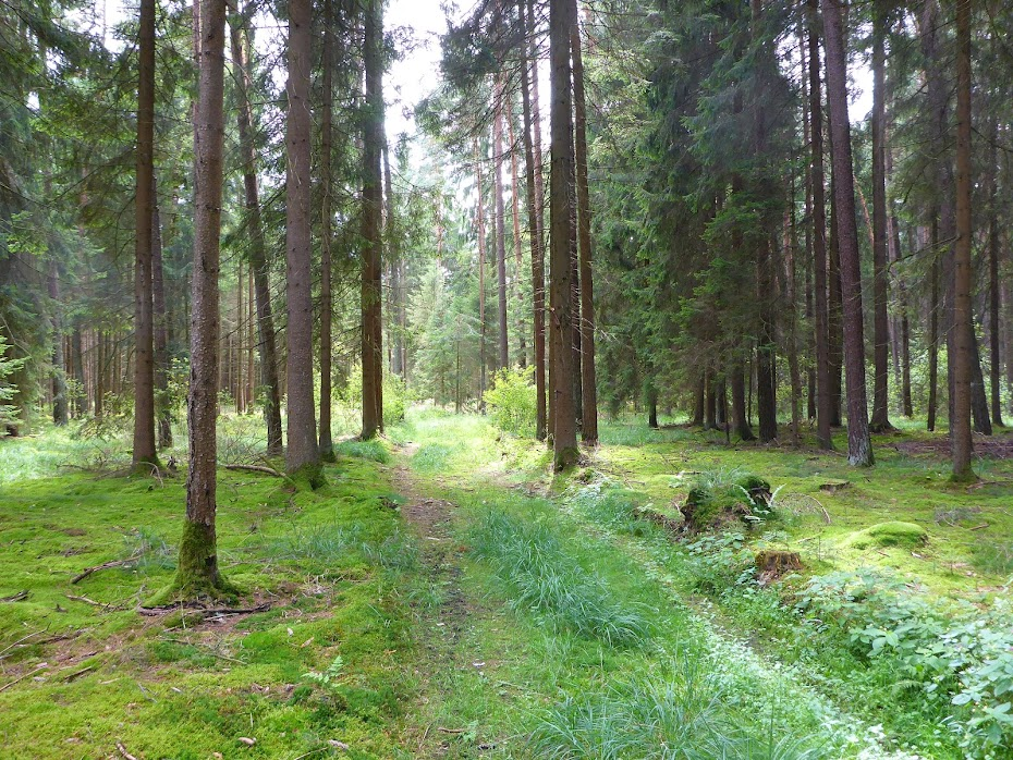 Лес, дорога, лесная