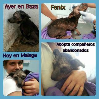 El perro abandonado en una caja ya está en Málaga
