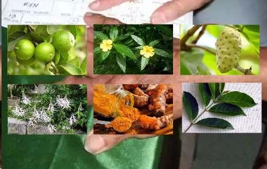 Ternyata obat herbal asam urat tinggi selama ini ada sekeliling kita, namun jarang kita ketahui. Ikuti petunjuk cara membuat ramuan untuk mengobati asam urat di sini !