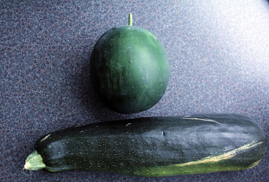 ErikaRianne: My little Garden: the biggest courgette I've ever seen.