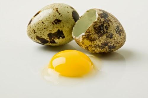 Khasiat Telur Puyuh, manfaat telur puyuh