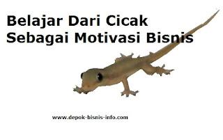 Bisnis, Motivasi Bisnis, Perjuangan Bisnis, Peluang Bisnis, Motivasi Cicak Untuk Bisnis