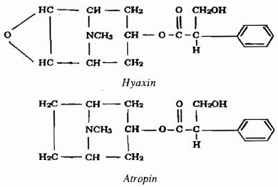 Thành phần hóa học Cây Cà Độc Dược - Datura metel - Nguyên liệu làm thuốc Chữa Ho Hen