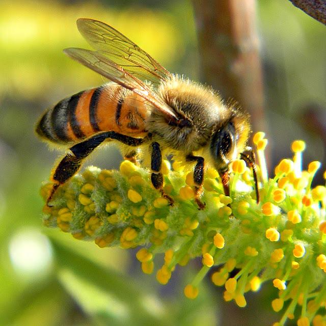 Πωλείται μέλι στην Θεσσαλονίκη