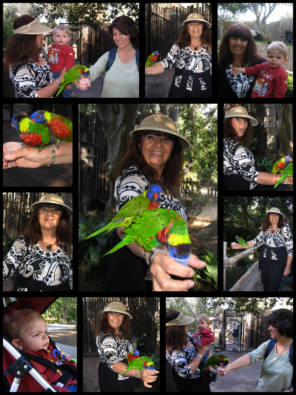 Lorikeet Collage: LadyD Books