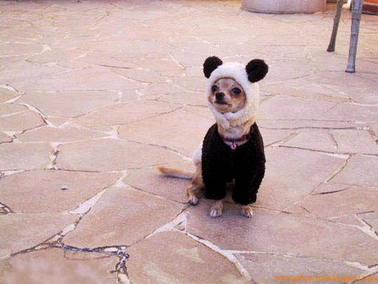3d Cute Dog Wallpaper Hd Wallpapers Cute Puppies