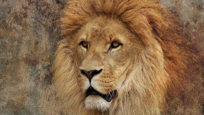 The Super Lion HD