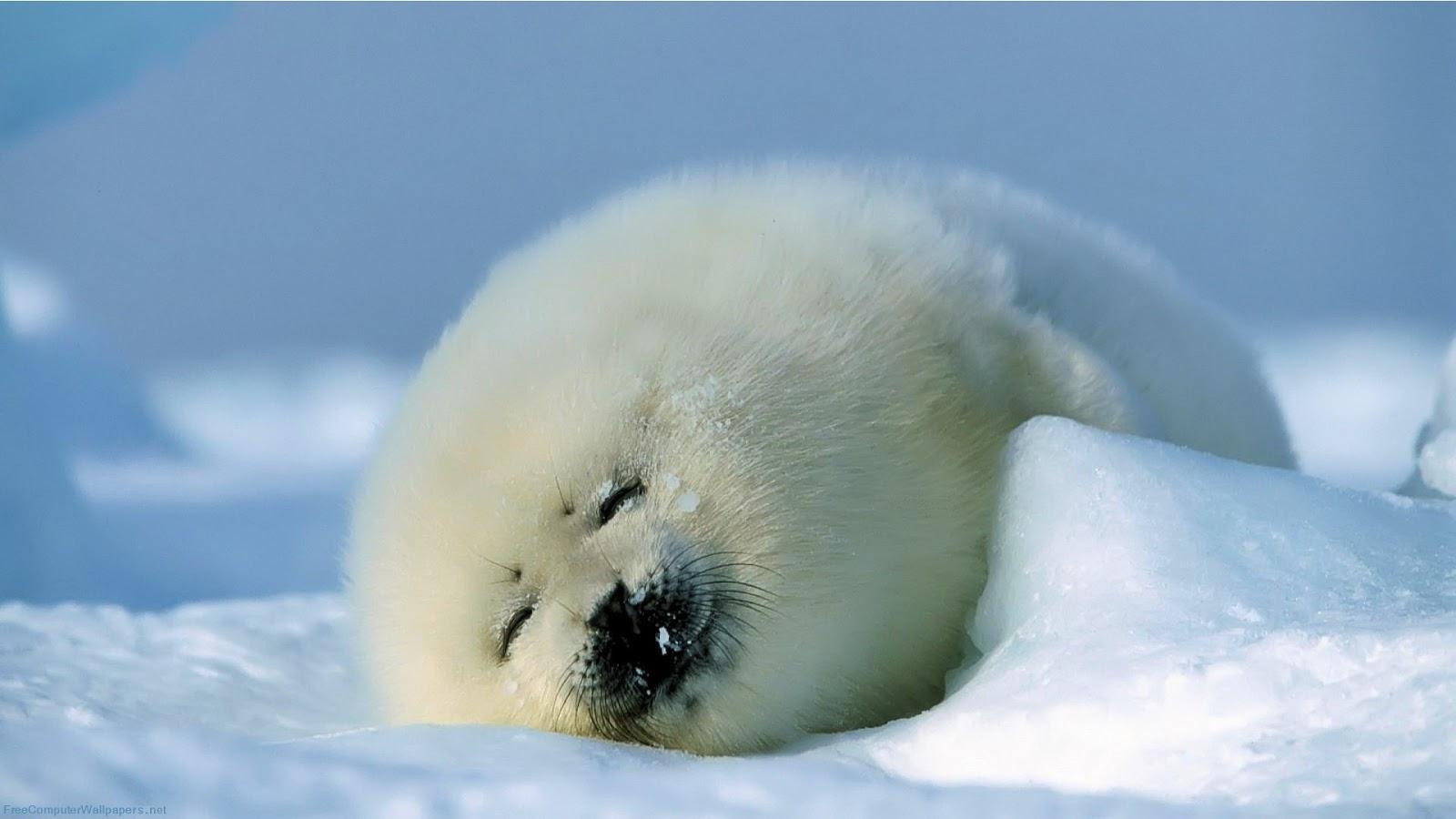 Fluffy Animals: January 2013