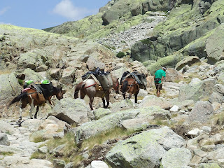 chevaux en direction du refuge de Gredos