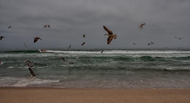 bord de mer costa de lavos