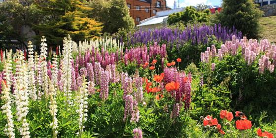 3 Tips For Starting a Flower Garden (2 bonus tips included)
