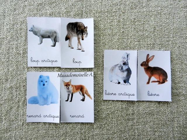 || Activité autour des cartes de nomenclature : Comparaison entre animaux de la forêt et polaires