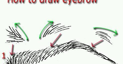 How To Draw A Realistic Eyebrow Step By Step Learn To Draw And Paint